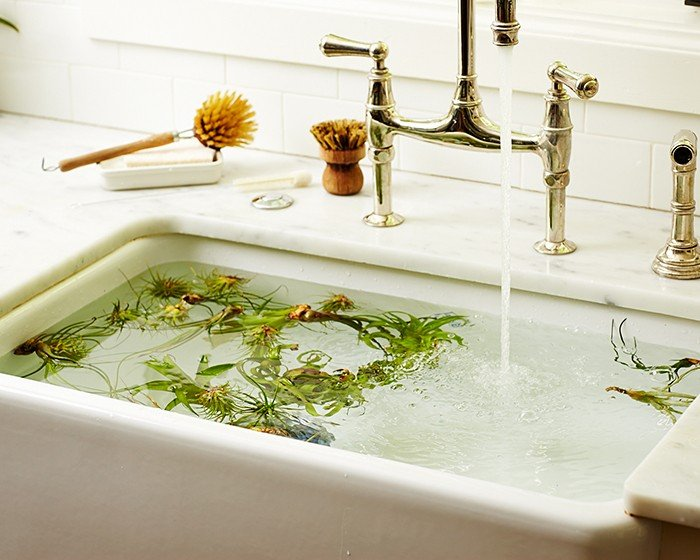Air plants soaking in a marble sink filling with water from a tall silver faucet